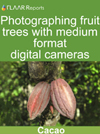 Photographing cacao fuits with medium format digital cameras.